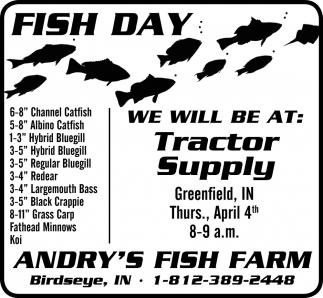 Fish Day