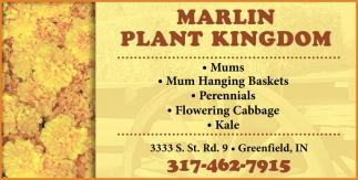 Mum Hanging Baskets - Mums - Perennials